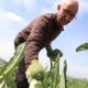 Juan José Cuenca lleva toda una vida cultivando en la huerta de Cox y vendiendo sus frutas y verduras en los mercadillos de la provincia.